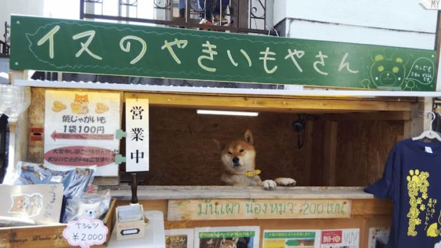 犬が店番をしている焼きいも屋さん